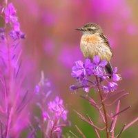 Краски лета :: Влад