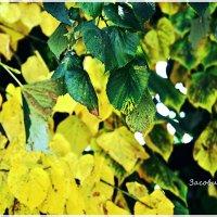 Вот она золотая осень :: Алена Засовина