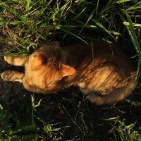 рыжий кот :: Марти Дерио