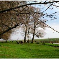 Сельская весенняя картина... :: Тамара (st.tamara)