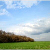 Над полем плывут облака... :: Тамара (st.tamara)