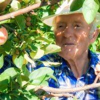 Вырастил яблоко :: Владимир