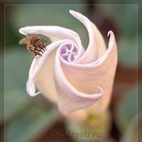 Пчелиная вселенная... :: Елена Васильева