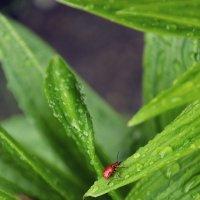 Красное на зеленом :: Виктория Велес