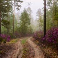 Утро туманное :: Сергей Брагин