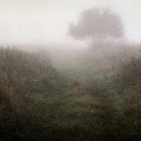 Сквозь туман...2 :: Андрей Войцехов