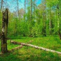 Мечтая о весне :: Роман Царев