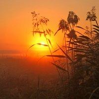 ..напротив солнца... :: Александр Герасенков