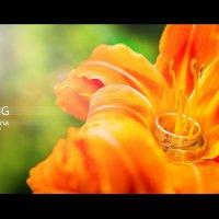 Wedding :: Сергей Пилтник