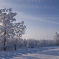 Зима :: Aleksey Fedosov