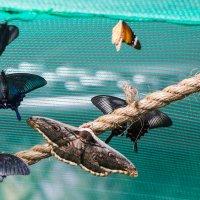 Выставка бабочек :: Сергей Форос