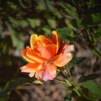 Осенняя красота :: Марина Захарова