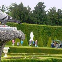 Сады и парк Версаля :: Галина