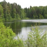 Лемболово, лесное озеро :: Елена Павлова (Смолова)