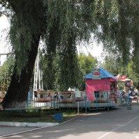 Ива в городском саду. :: Олег Афанасьевич Сергеев