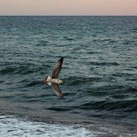 Давно та чайка улетела :: Виолетта