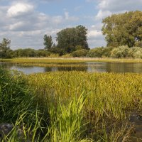 Всяк кулик своё болото хвалит. :: Kassen Kussulbaev