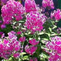 Цветы :: Миша Любчик