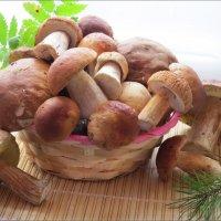 Белые грибочки :: Ната Волга