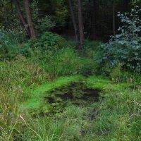 В одном темном-темном лесу IMG_8684 :: Андрей Лукьянов
