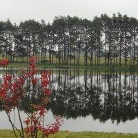 Пруд у Мирского замка :: Елена Павлова (Смолова)