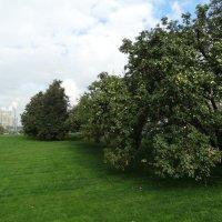 Мааасковские яблочки :: Svetlana27