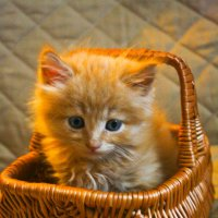 Котёнок в корзинке :: Никита Иванов