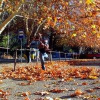 Дотянуться до осени :: Наталья (D.Nat@lia) Джикидзе (Берёзина)