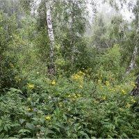 Утро туманное в лесу :: galina tihonova