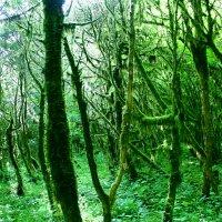 Дремучий лес.... :: Allekos Rostov-on-Don