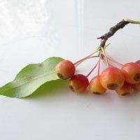 Яблочки :: Н.Н. Баранова