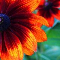 осенние цветы :: Ljudmila Korotkova