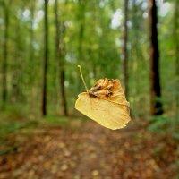 Падающая осень :: Alexander