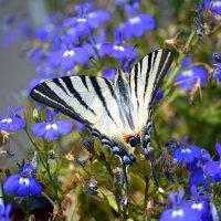 Бабочка :: Valeria