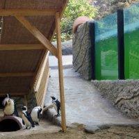 Пингвины в Грузии :: Наталья Джикидзе (Берёзина)