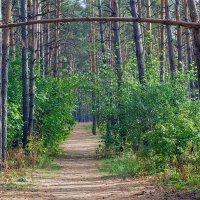 На лесной тропе :: Юрий Стародубцев
