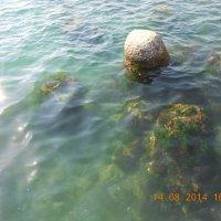 Водный мир :: Елена