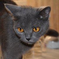 Моя кошка :: vlad10787 kekshtas