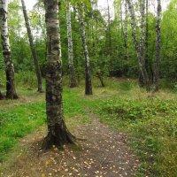 Сентябрь в парке IMG_8963 :: Андрей Лукьянов