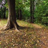 На старых местах - сентябрь IMG_9047 :: Андрей Лукьянов