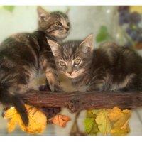котята :: Алена Малых