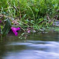 Цветок над водой. :: Елена Лобанова