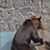 Жара..лето и медведь :: Татьяна Кретова