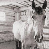 Лошадь :: Юлия Нагибович