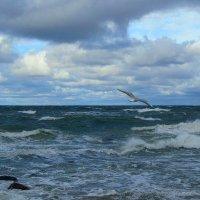 Над волнами :: Сергей Карачин