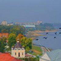 Птицы :: Alexandr Яковлев