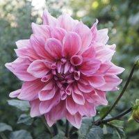 Сказочный цветок :: Юлия Быкова