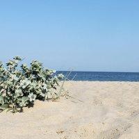 Море:) :: Юлия Яровенко