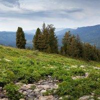 В горах Алтая. Восточный Казахстан :: Sergey Baturin