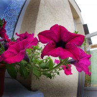 Цветы на окне :: Дмитрий Лебедихин